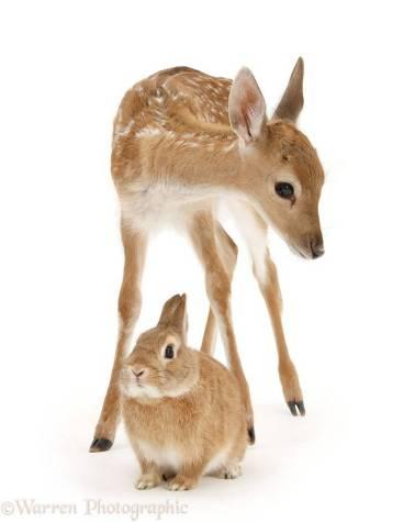 animais-cores-8